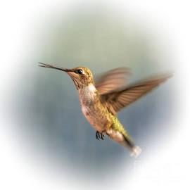 Janice Rae Pariza - Talking Hummingbird