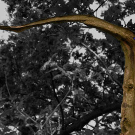 Clive Beake - Tall Dragon