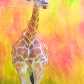 Daphne Sampson - Tall Giraffe Loveliness