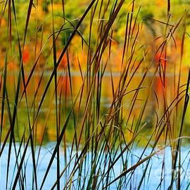 Randy Pollard - Tall Grass Abstract
