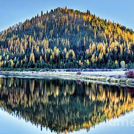 Tamarack Glow Idaho Landscape Art By Kaylyn Franks by Kaylyn Franks