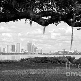 Carol Groenen - Tampa Skyline through Live Oak - Black and White