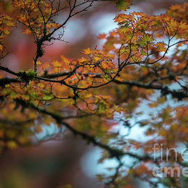 Tangled Branches of Autumn - Mike Reid