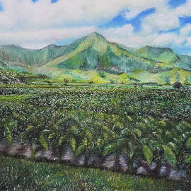 Carithanne Cushman - Taro fields on Kauai