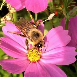 Debra Lynch - Tasty Pollen