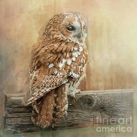 Brian Tarr - Tawny Owl
