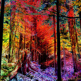 Hanne Lore Koehler - Technicolor Autumn Forest