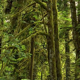 Inge Riis McDonald - Temperate Rain Forest - 365-1