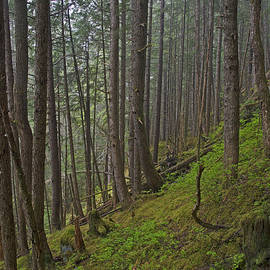 Cathy Mahnke - Temperate Rainforest