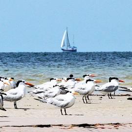Terns and Sailors by Mary Ann Artz