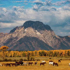 Darren White - Teton Horse Ranch