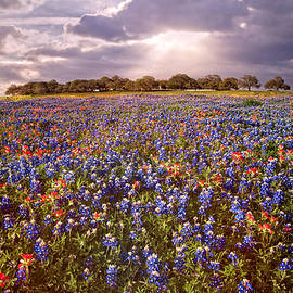 Texas Bluebonnet Heaven by Lynn Bauer