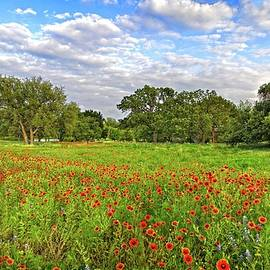 Lynn Bauer - Texas Hill Country Spring Wildflowers
