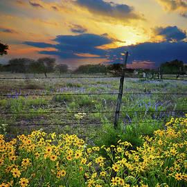 Lynn Bauer - Texas Wildflowers at Sunset
