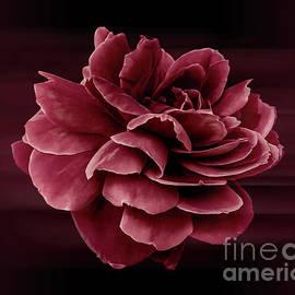 Thank You - Fine Art Photography By Ronna A. Shoham by Ronna A Shoham
