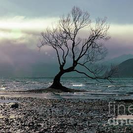 That Tree Again by Karen Lewis