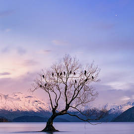 That Wanaka Tree by Jose Maciel