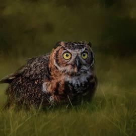 Jai Johnson - The Appetizer Great Horned Owl Art