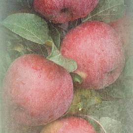 Toni Abdnour - The Apple Cluster