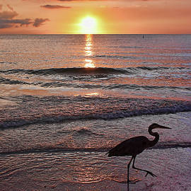 HH Photography of Florida - The Beachcomber Shuffle