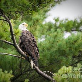 Jan Mulherin - The Beauty of the Eagle