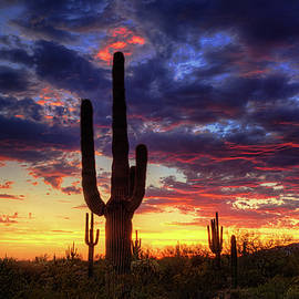 Saija  Lehtonen - The Beauty of The Sonoran Desert at Sunset