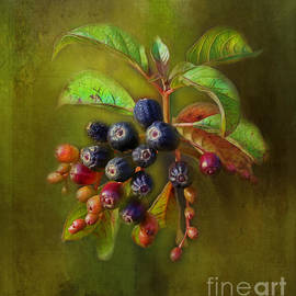 The Berries by Judi Bagwell