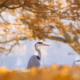 Roeselien Raimond - The Blue Heron and the Red Tree