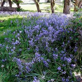 The Bluebell Wood by John Hughes