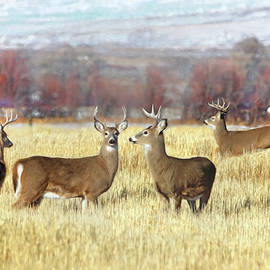 Jennie Marie Schell - The Bucks Stop Here White-Tail Deer
