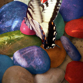 Yuri Lev - The Butterfly and Colored Stones