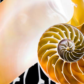 The Chambered Nautilus by Colleen Kammerer