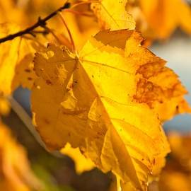 Barbara Lobosco - The Color of Autumn