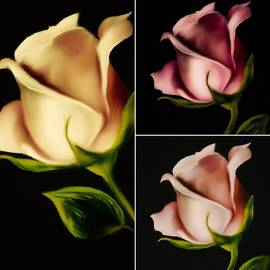 THE COLOR Of ROSES by Michele Koutris