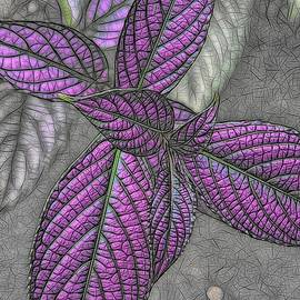 The Color Purple by Heidi Fickinger
