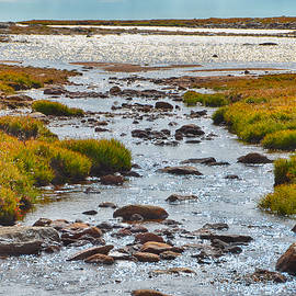 The Colorado Tundra by Angelina Tamez