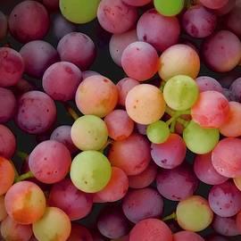 Colors of Grapes by Flying Z Photography by Zayne Diamond