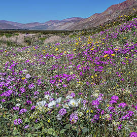Peter Tellone - The Colors of Spring Super Bloom 2017