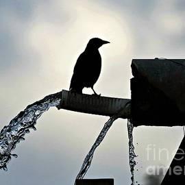 Diann Fisher - The Convenient Bird Fountain