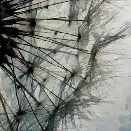 The Dandelion Silhouette by Steve Taylor