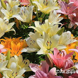 The Daylilies of Early Summer by Dora Sofia Caputo
