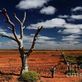 Christian Hallweger - The Death of a Tree