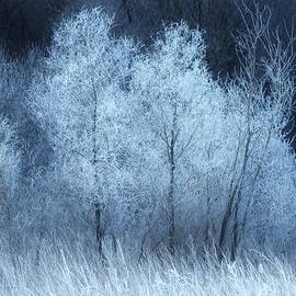 Lori Frisch - The Enchanted Forest