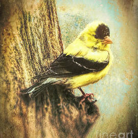 Tina LeCour - The Exquisite Goldfinch
