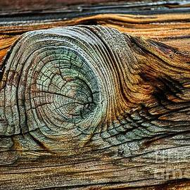 The Eye in the Wood by Norman Gabitzsch