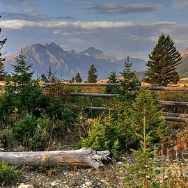 The Fence and View by Steve Brown