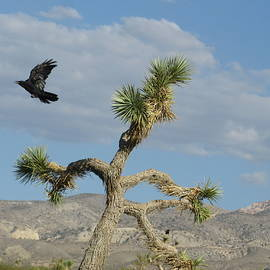 Ausra Huntington nee Paulauskaite - The Flight of Raven. Lucerne Valley.