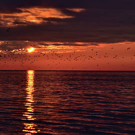 Maria Keady - The Flock at Sunset