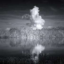 The Florida Everglades by Mark Andrew Thomas