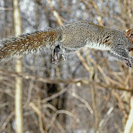 The flying nut thief by Asbed Iskedjian